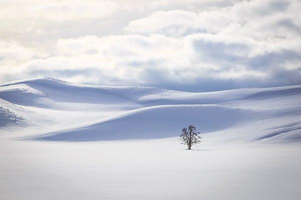 Everything SNOW